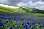 Горный Алтай весной