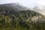 лесной заповедник Тонгасс, Аляска