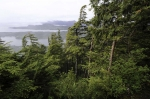 Tongass National Forest, Alaska State, USA