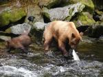 бурые медведи в заповеднике Тонгасс