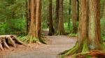 национальный лесной заповедник Тонгасс в США