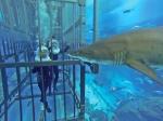 клетка с акулами в Дубае