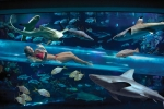 бассейн с акулами в Дубае