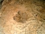 след динозавра в заповеднике Сатаплиа