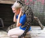 дымчатые леопарды играют с работницей зоопарка