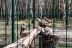 птицы в Белгородском зоопарке