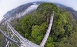джунгли Улу-Тембуронг