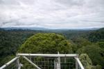 вид на джунгли Улу-Тембуронг