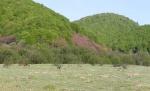 поросший травой котлован озера Эрцо