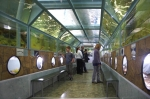 морской тоннельный аквариум Батискаф
