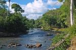 природа Суринама