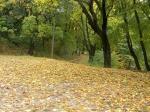 осень в парке Нивки, Киев
