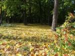 парк Нивки осенью