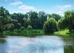 пруд в парке Нивки
