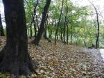 лес в парке Нивки