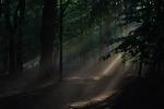 лес в парке Нивки, Киев