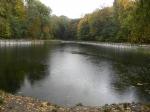 пруд в Нивках