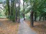 лес в Нивках