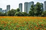 цветение в парке Хамарикю