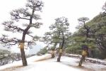 сад-парк Хамарикю зимой