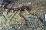 Силезский ящер из Ополя