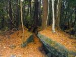 лес Аокигахара на лавовом плато