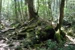 Aokigahara Forest, Tokio