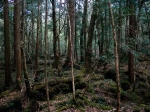 Aokigahara Forest in Tokio