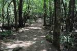 тропинка в лесу Аокигахара
