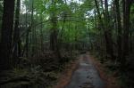 дорога через лес Аокигахара