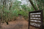 таблички для самоубийц в лесу Аокигахара