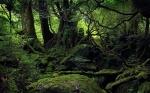Aokigahara Forest in Tokio, Japan