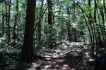 лес Аокигахара Дзюкай, Токио, Япония
