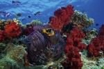 дайвинг на островах Фиджи