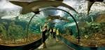 аквариум в Лоро-парке