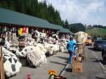 базар на Яблуницком перевале