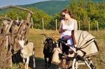 козы в Парке Антилоп
