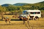 сафари на автобусе в Парке Антилоп