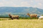 индийские антилопы в Парке Антилоп