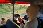 сафари в Парке Антилоп