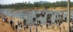 купание слонов питомника Пиннавела