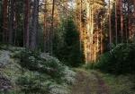 Вепсский лес, Ленинградская область