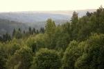 парк Вепсский лес в Ленинградской области