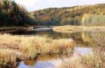 парк Вепсский лес в Ленинградской области, Россия
