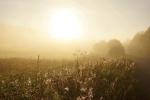 туман в Вепсском лесу
