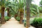 пальмовая роща в парке Жоана Миро