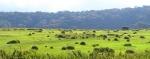 зеленые поля в Хортон Плейнс