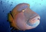 Fish Head Maldives