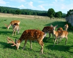 зоопарк в Карпатах