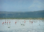 птицы озера Энрикильо